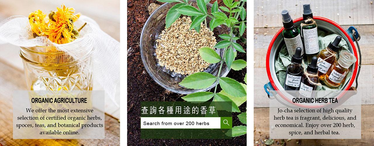 單方香草植物-總覽-1