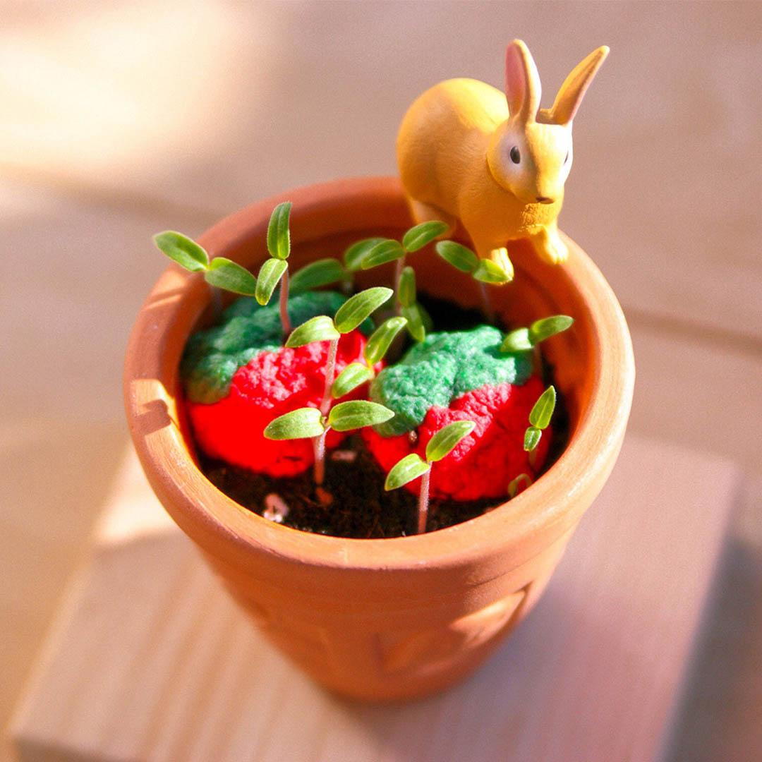 地球植栽組 小午茶植栽組 小番茄植栽組-3