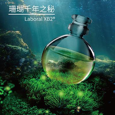 珊瑚千年之秘 Laboral XB2