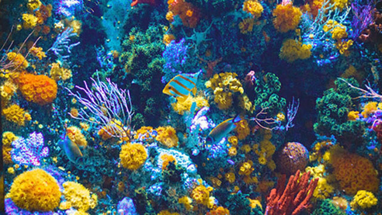 你知道,一小滴防曬乳就足以危害一大片珊瑚嗎?-2