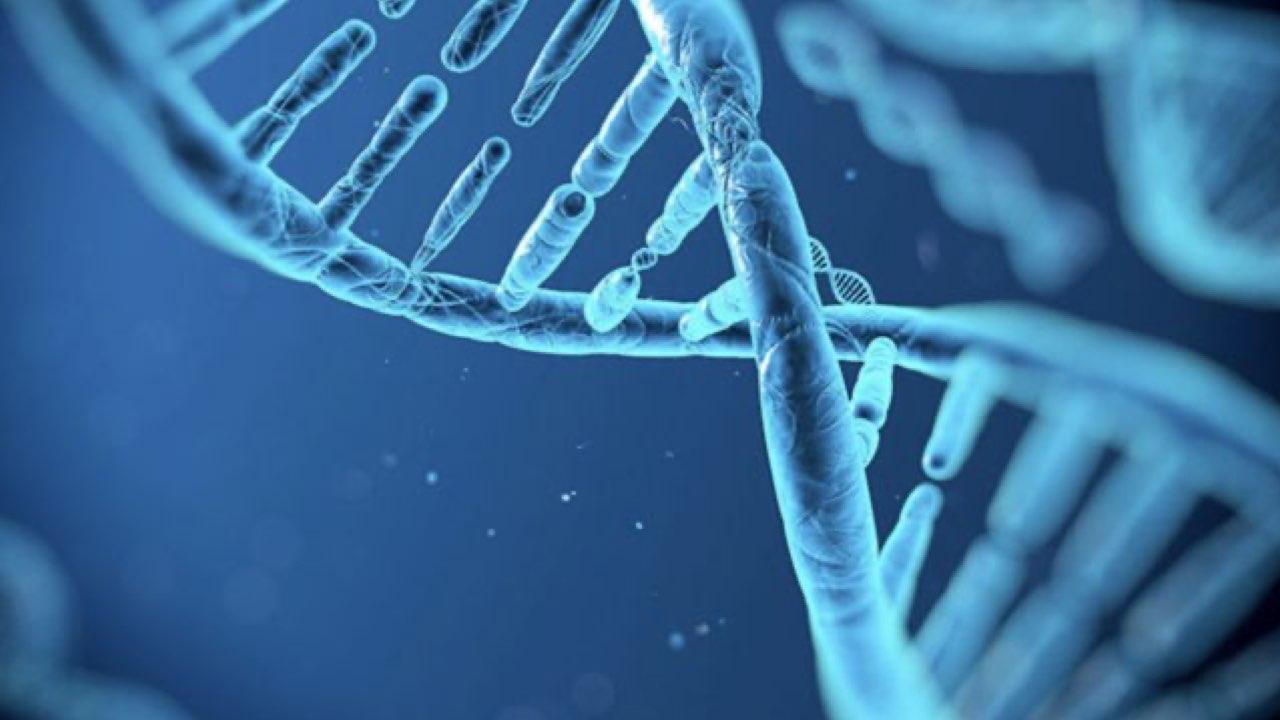 《Nature》表觀遺傳新發現! 果蠅蛋白質HP1a 為發育時「DNA折疊」關鍵-2