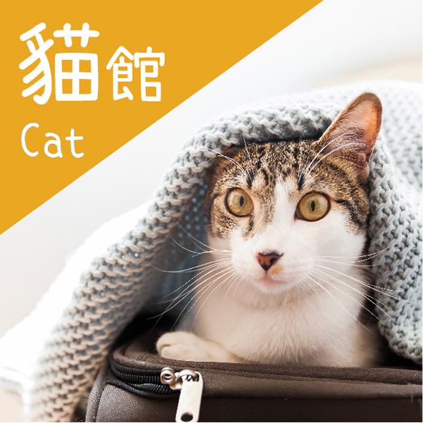 貓狗分類-2